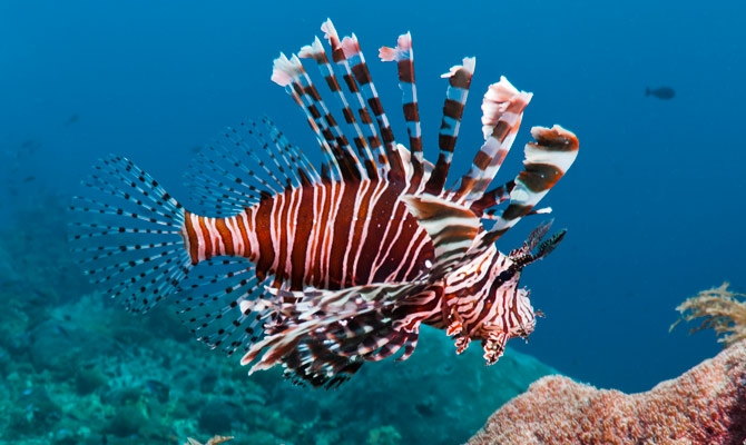 Lionfish workshop